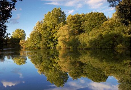 Original Trees Water Image